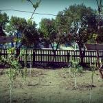 Распланированный сад весной