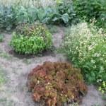 Лечебные растения