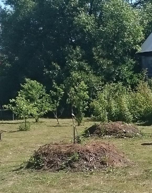 Садовые деревья на высоких грядках